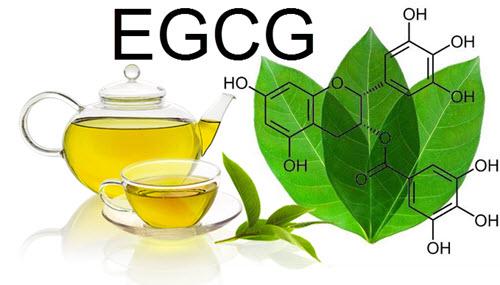 EGCG (Epigallokatekingallat)